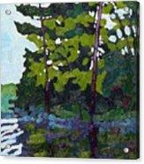 Backlit Pines Acrylic Print