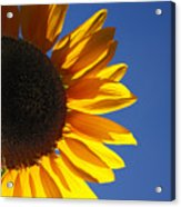 Backlit Sunflower Acrylic Print