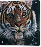 Backlit Tiger Acrylic Print
