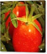 Backyard Garden Series - Roma Tomatoes Acrylic Print