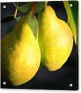 Backyard Garden Series - Two Pears Acrylic Print