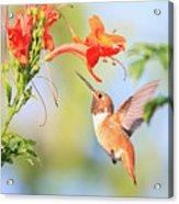 Backyard Hummingbird Series # 54 Acrylic Print