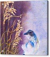 Bad Feather Day Acrylic Print
