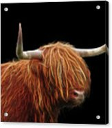 Bad Hair Day - Highland Cow - On Black Acrylic Print