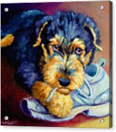 Bad Puppy Airedale Terrier Acrylic Print by Lyn Cook