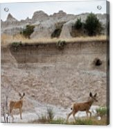 Badlands Deer Sd Acrylic Print