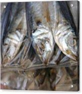Bag O' Fish 2 Acrylic Print