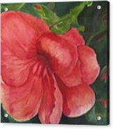 Bahama Beauty Acrylic Print