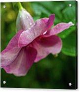 Bahamas Flower Acrylic Print