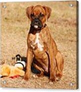 Bailey The Boxer Puppy Acrylic Print