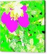 Baja Littleaf Rose Acrylic Print