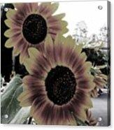 Balboa Beauties Acrylic Print