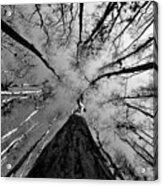 Bald Cypress Sky Acrylic Print