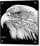 Bald Eagle #4 Acrylic Print