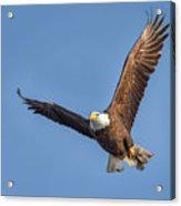 Bald Eagle And Fish Acrylic Print