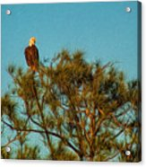 Bald Eagle Burnt Store Marina Florida Acrylic Print