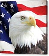 Bald Eagle Close Up Acrylic Print