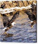 Bald Eagle Fishing Pano Acrylic Print