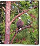 Bald Eagle Fresh Catch Acrylic Print