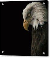 Bald Eagle II Acrylic Print