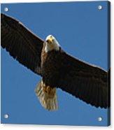 Bald Eagle In Flight 031520169038 Acrylic Print