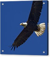 Bald Eagle In Flight-signed-#2709 Acrylic Print