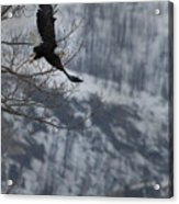Bald Eagle In Flight-signed-#4014 Acrylic Print
