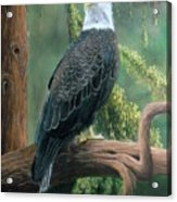 Bald Eagle In Pastel Acrylic Print