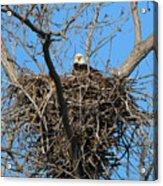 Bald Eagle Lookout  3661 Acrylic Print