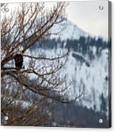 Bald Eagle Perched-signed-#4008 Acrylic Print