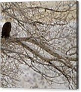 Bald Eagle-signed-#4879 Acrylic Print