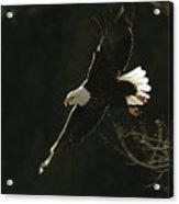 Bald Eagle-signed Acrylic Print