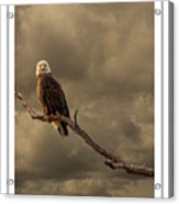 Bald Eagle Storm Acrylic Print