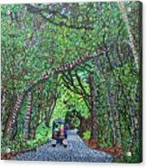 Bald Head Island, Federal Road Acrylic Print