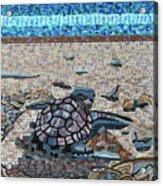 Bald Head Island, Loggerhead Sea Turtle Acrylic Print