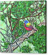 Bald Head Island, Painted Bunting At Defying Gravity Acrylic Print
