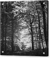 Baldringe Meadows Acrylic Print