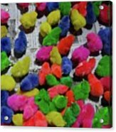 Bali Coloured Chicks Acrylic Print