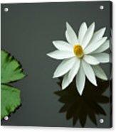 Bali Flower Acrylic Print