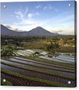 Bali Terrace Rice Field Acrylic Print
