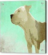 Bali The Dog B Acrylic Print