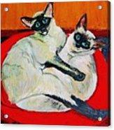 Balinese Cats Hugging Acrylic Print