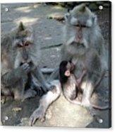 Balinese Monkey Family Acrylic Print