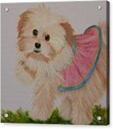 Ballerina Puppy Acrylic Print