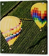Balloons Over Napa Valley Acrylic Print by Cindy Lee Longhini