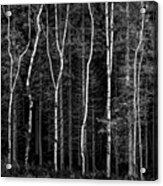 Ballysallagh Forest Mono Acrylic Print