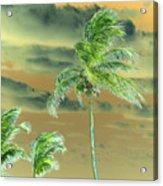 Balmy Palmy Acrylic Print