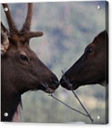 Bambi And Faline Acrylic Print