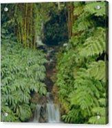 100837-bamboo And Ferns Creek  Acrylic Print