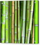 Bamboo Background Acrylic Print by Carlos Caetano